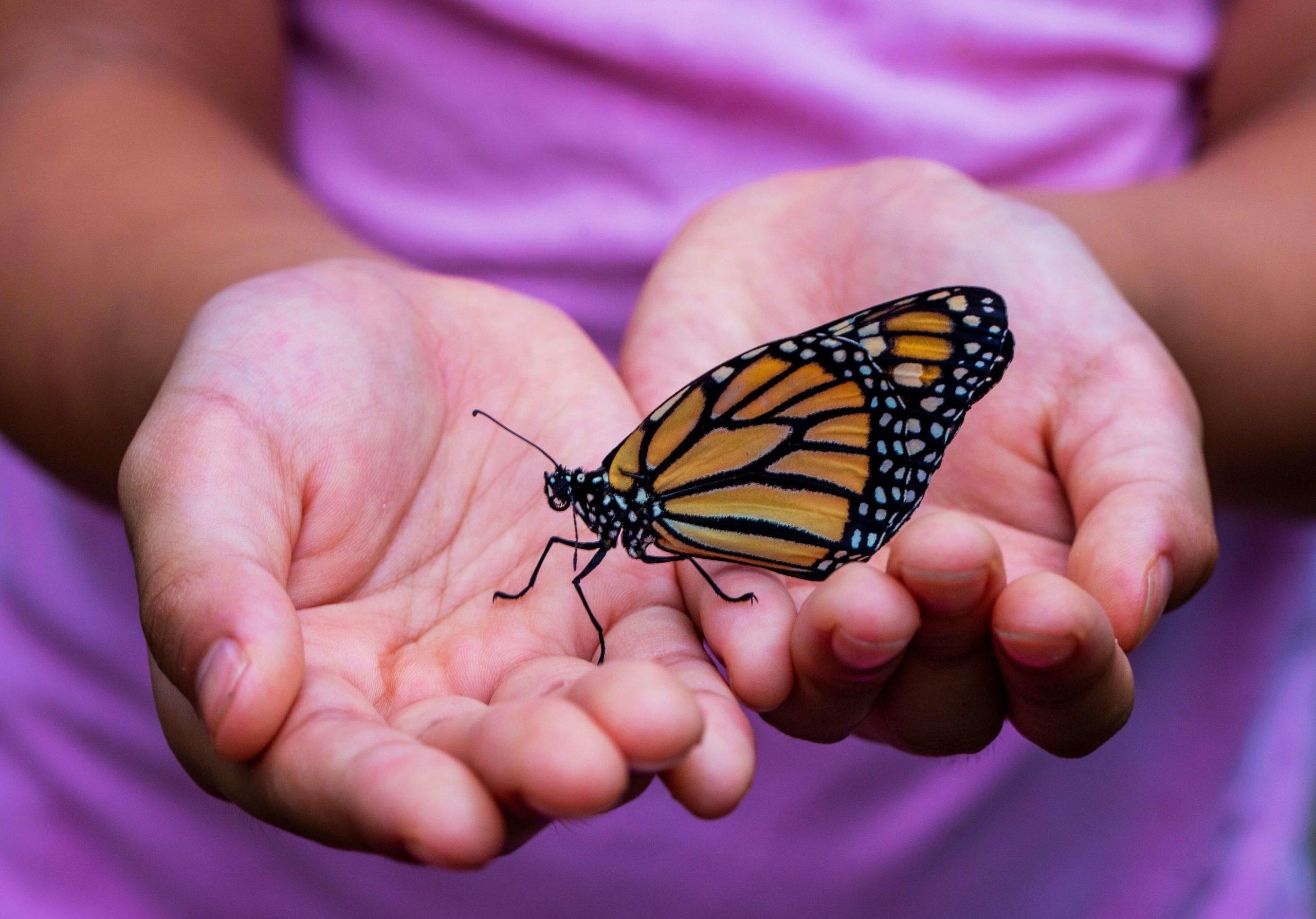 enfant tien tun papillon
