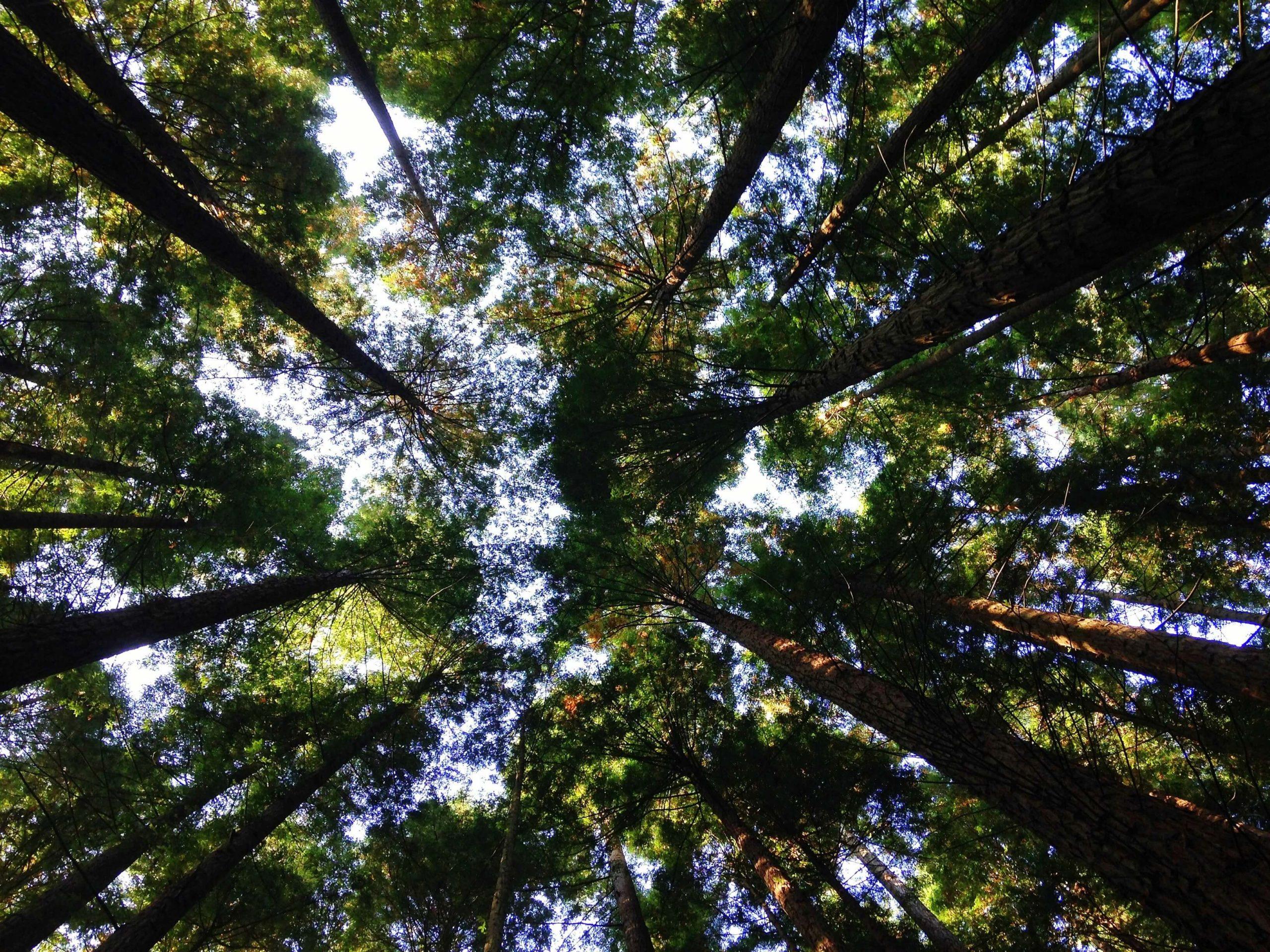 arbres grandissent ensemble