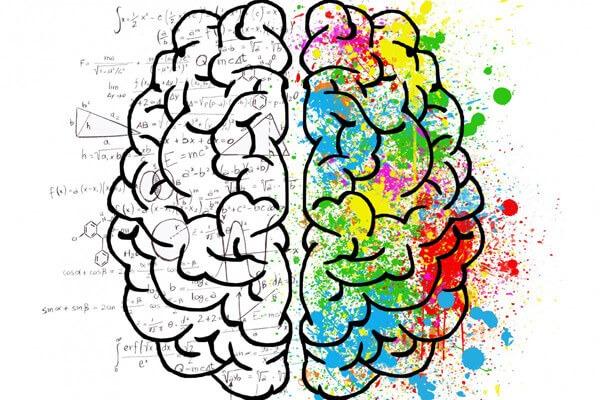 le cerveau des différents types de parents - profils psychologiques